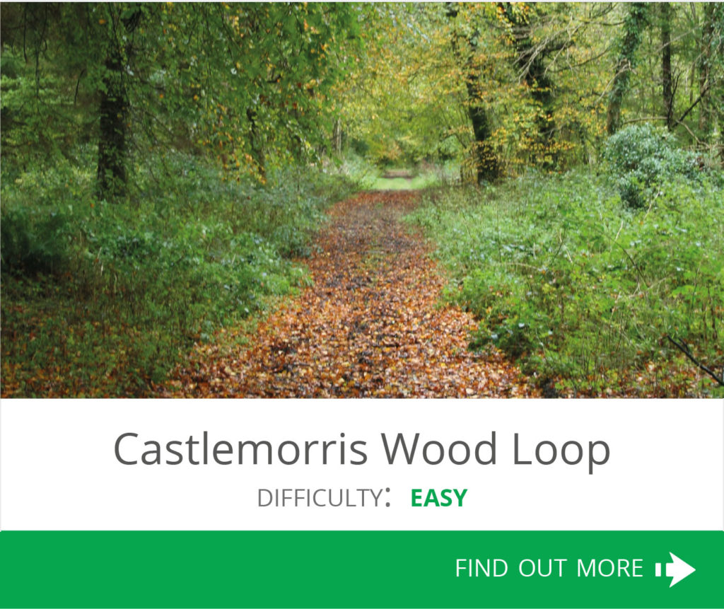 Claremorris Wood Loop