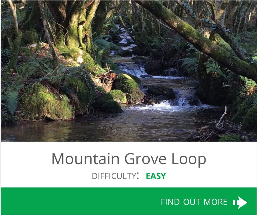 Mountain Grove Loop