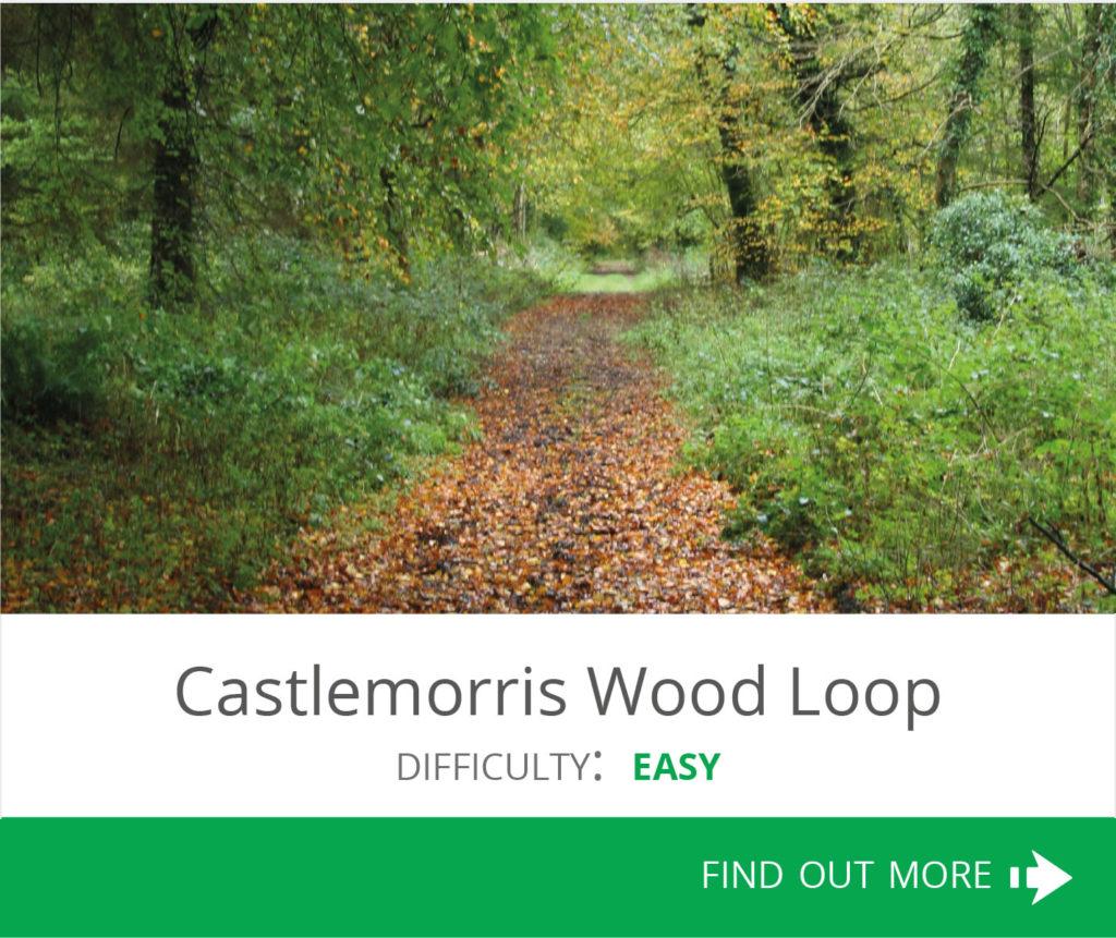 Castlemorris Wood Loop