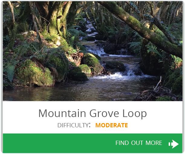 Mountain Grove Loop